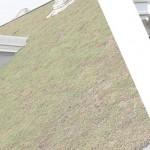 Rijswijk-groendak-veilig-te-onderhouden-geen-schijnveiligheid-Vlindar